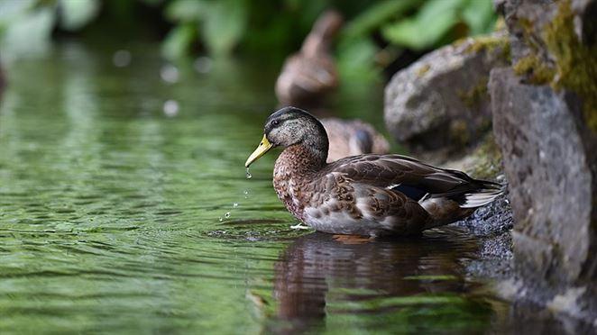 Najnovšia správa MŽP o stave životného prostredia: Ako sme na tom s vodou?