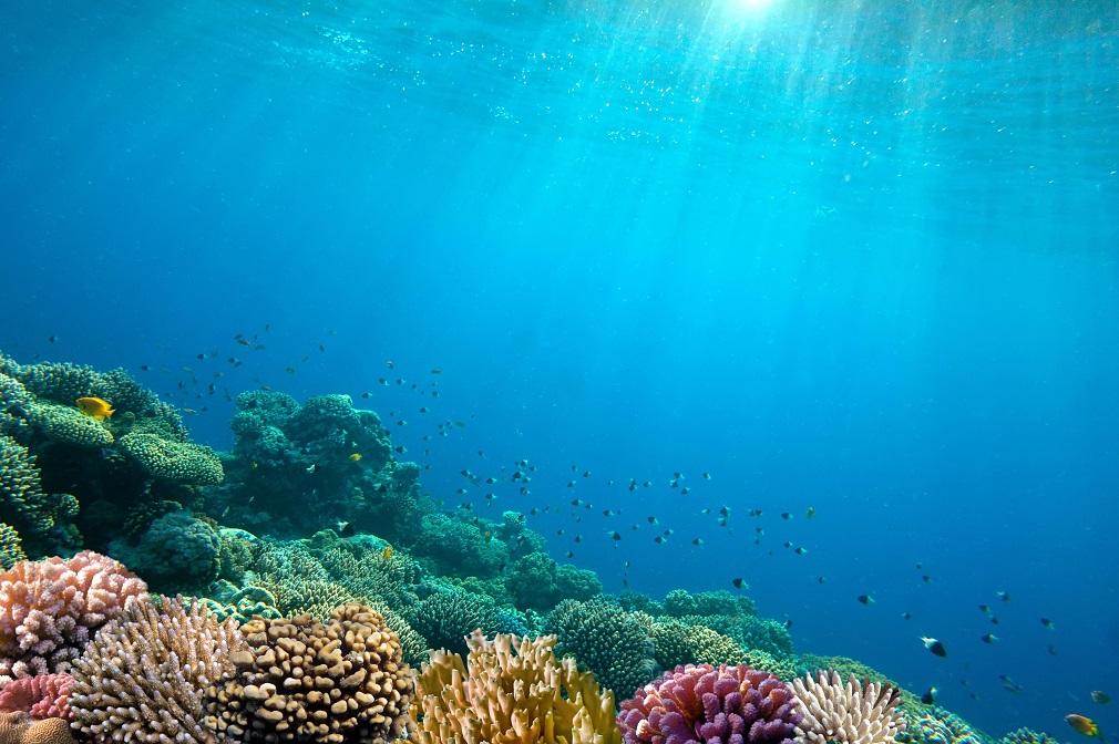 Čínski vedci tvrdia, že schopnosť oceánu pohlcovať CO2 dokáže zvýšiť jeden prvok