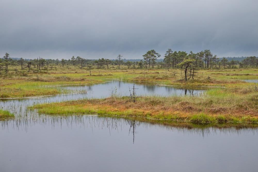 Vedci spočítali, aké ekonomické prínosy má včasná obnova rašelinísk