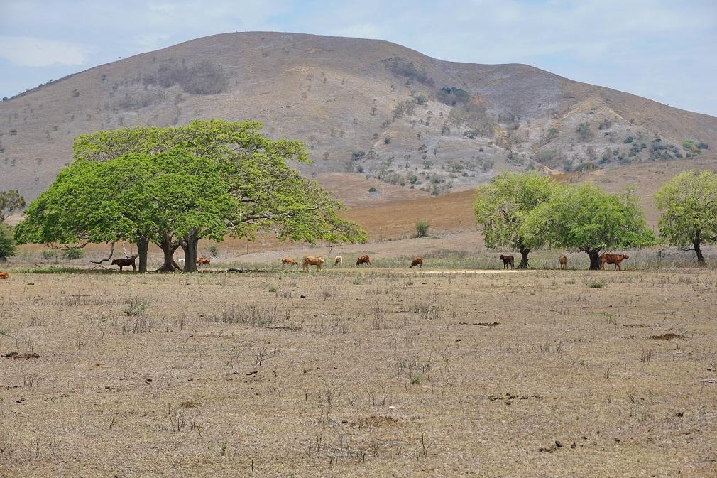 Zmena klímy nemusí viesť k rozšíreniu suchých oblastí, tvrdia výskumníci