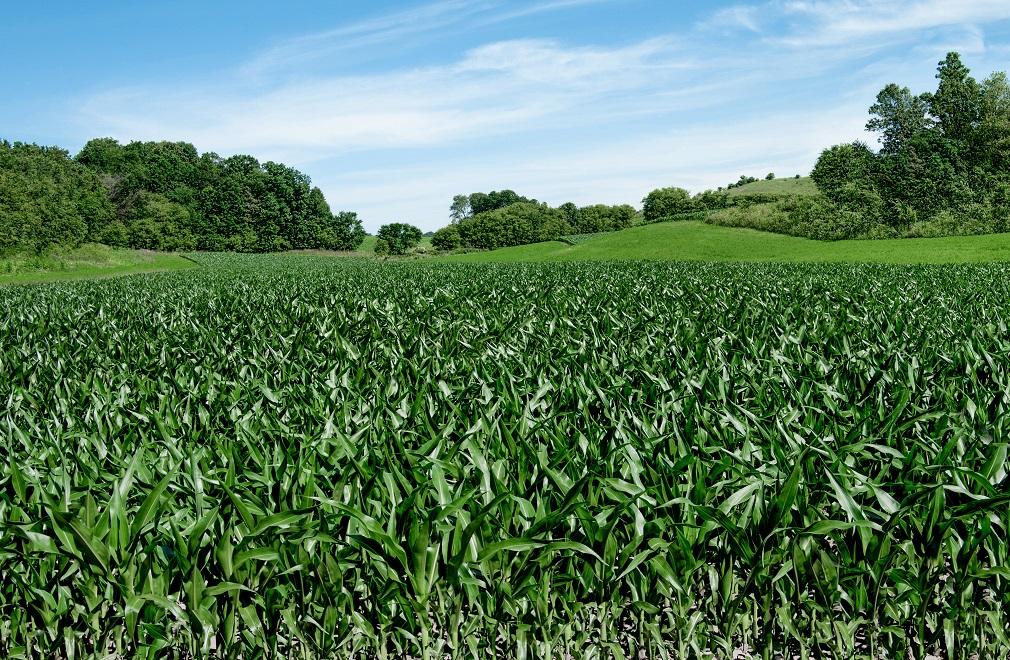 Biomasa ako zelený zdroj energie? Bez udržateľného hospodárenia zhoršuje vodný stres