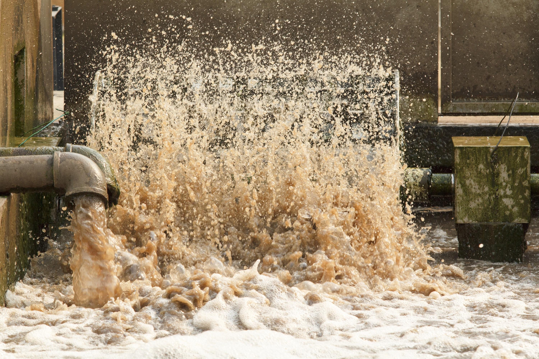 Nóri premieňajú živiny z odpadových vôd na hnojivo