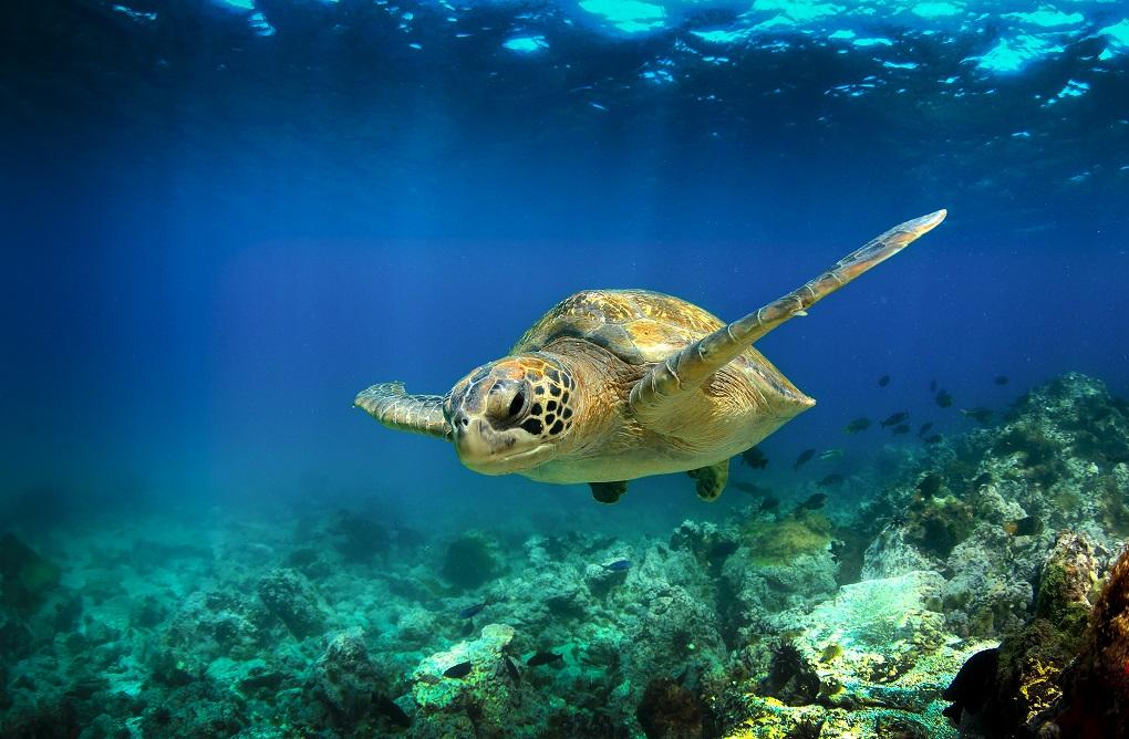 Ako porozumieť budúcnosti oceánov pomocou fytoplanktónu?