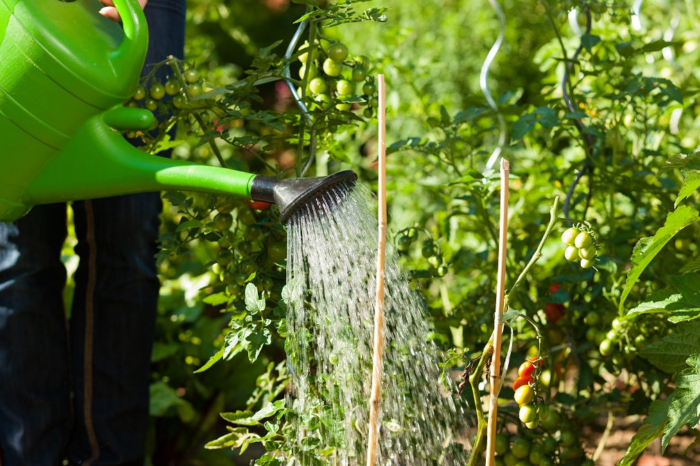 V Čechách chystajú legislatívnu úpravu. Má podporiť väčšie využívanie sivej vody