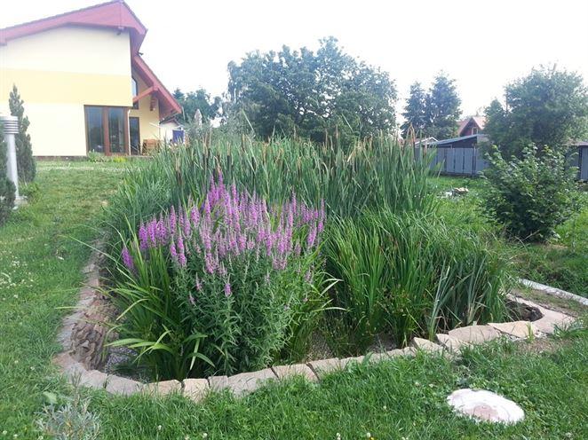 Koreňové ČOV majú potenciál aj na Slovensku. Dôkazom je projekt ekočističiek