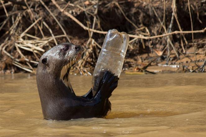 Až 100 miliónov plastov končí ročne v prírode, zraniteľné sú aj vodné ekosystémy