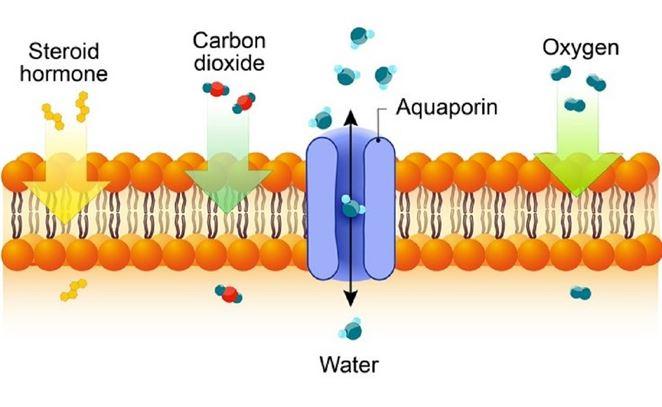 Proteíny dokážu vylepšiť proces reverznej osmózy