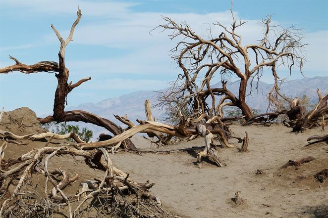 V Kalifornii v boji proti nedostatku vody pomáhajú technológie aj manažment