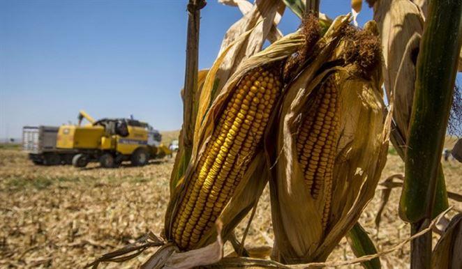 Poľnohospodári na juhu Európy trpia v dôsledku zmeny klímy. Mierne zasiahnuté je aj Slovensko