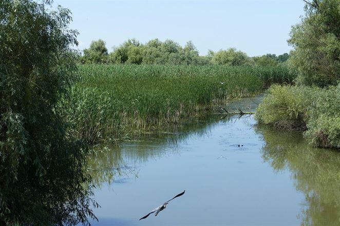 Vnútrozemská delta Dunaja je v ohrození, tvrdí BROZ
