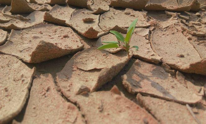 Sucho spôsobuje problémy poľnohospodárom