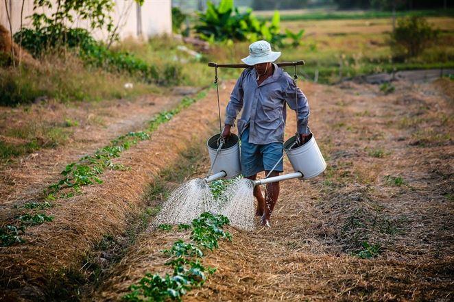 Poľnohospodárstvo vyvíja dvojaký tlak na vodné zdroje, rokmi však klesá