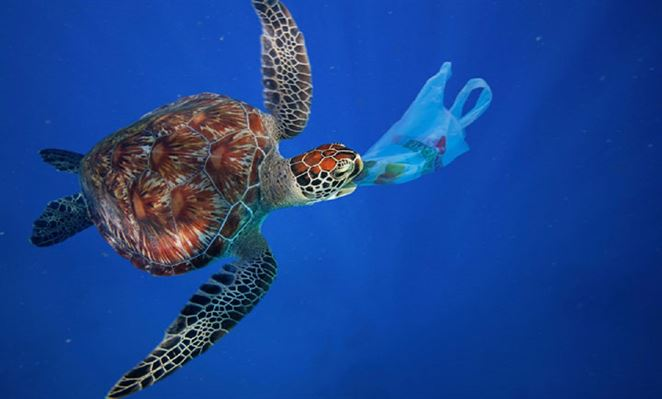 Obnovte si šatník a vyčistite oceán. Svetoznáme značky ponúkajú riešenie