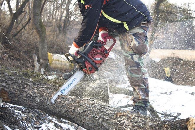 Výrub brehových porastov v okolí Dunaja považujú odborníci za zbytočný